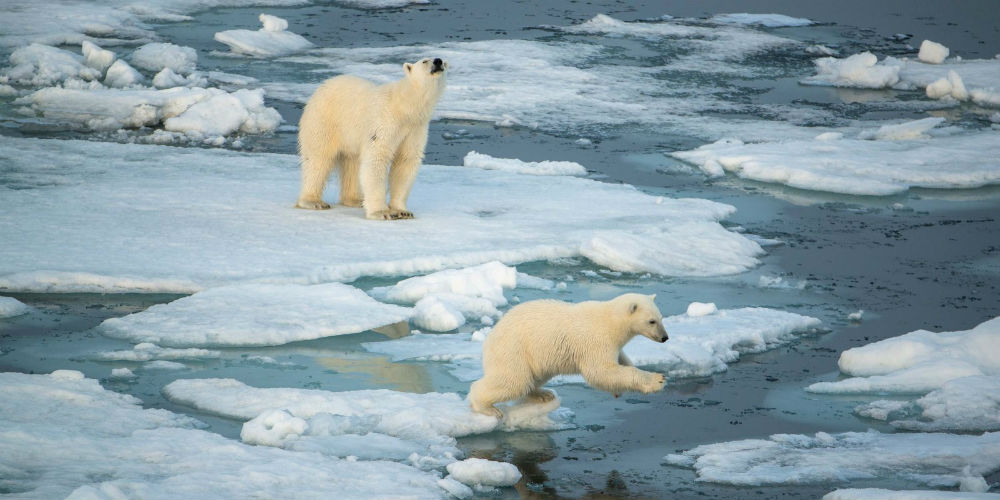 Circumnavigating Svalbard - In the Realm of the Polar Bear