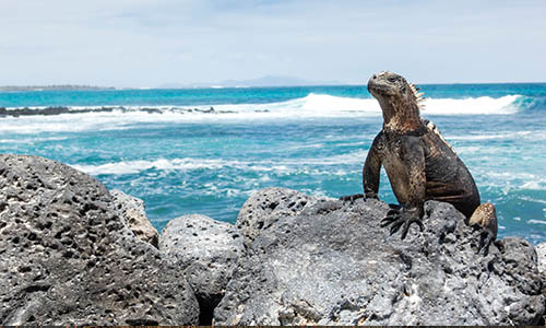 Marine iguana on rock at beach against sky