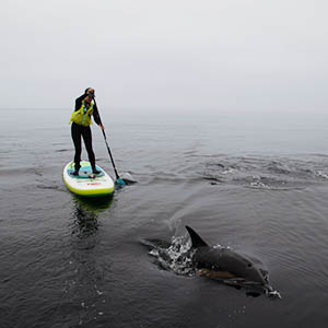 Paddle boarding with a dolphin