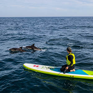 Paddle boarding with dolphins